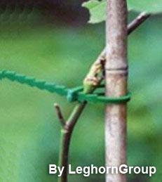 legacci per piante